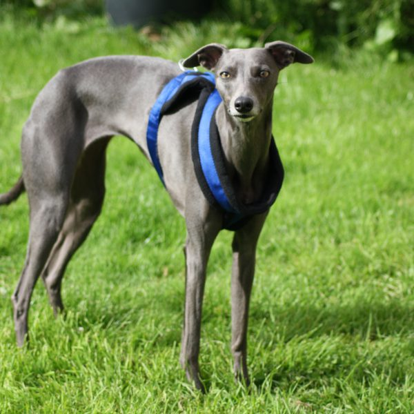 Comfortable Fleece Breakaway Dog Harness 3 Colours Whippet