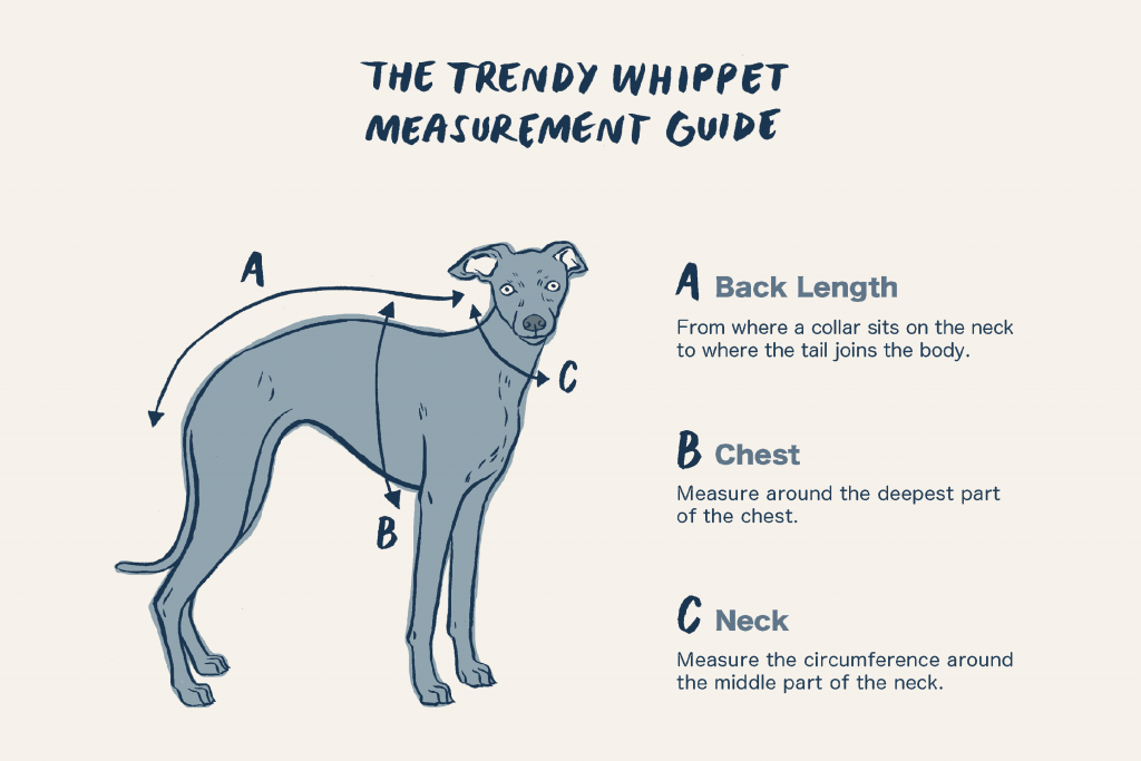Trendy Whippet Measurement Guide