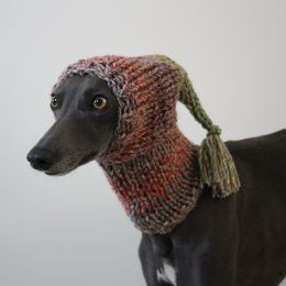 hat whippet greyhound