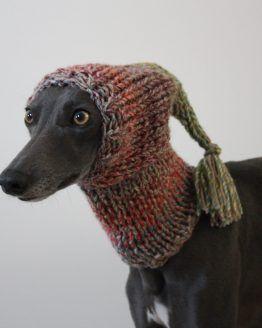 hat whippet greyhound