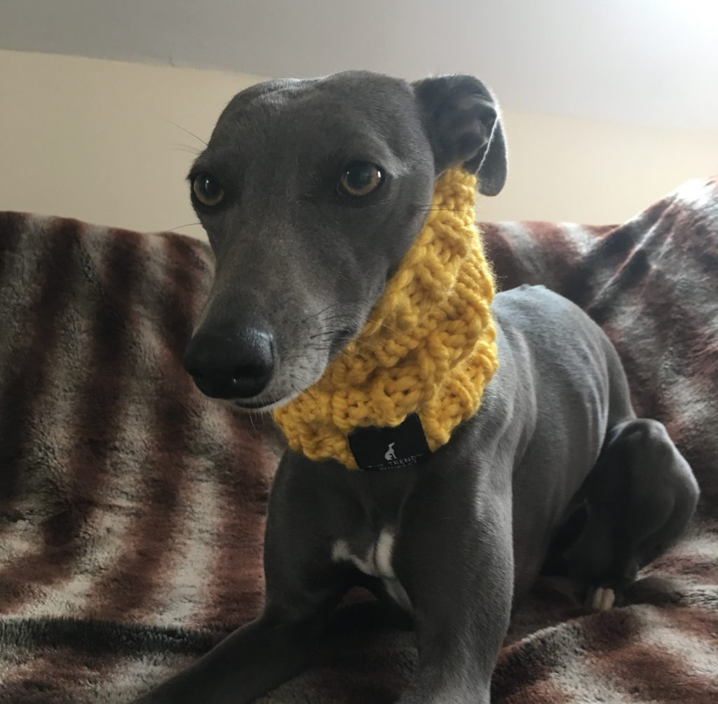Whippet Thick Mustard Knit Neck Warmer Snood Greyhound