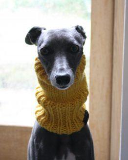 snood whippet greyhound