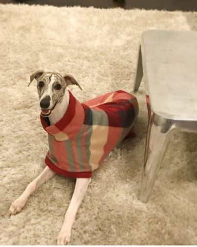 Whippet wearing our Tartan Fleece Coat