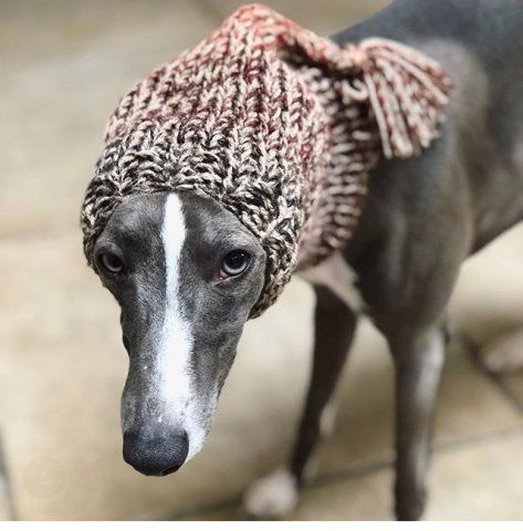 Whippet wearing our Knitted Tassel Hat