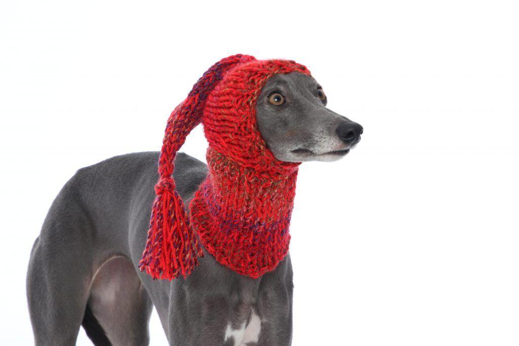 Whippet Red Knit Hat Greyhound Italian Sighthound Lurcher