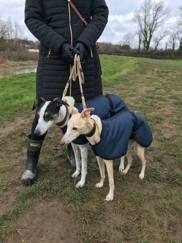 Matching Lurchers in our Navy Waterproof coats