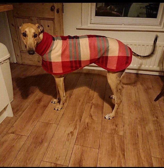 Lurcher in our Tartan Fleece Coat