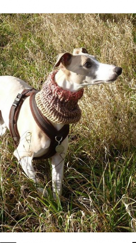 Whippet wearing our Knitted Neck Warmer