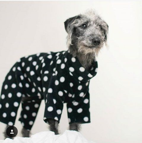 Bedlington Whippet wearing our Polka Dot Onesie