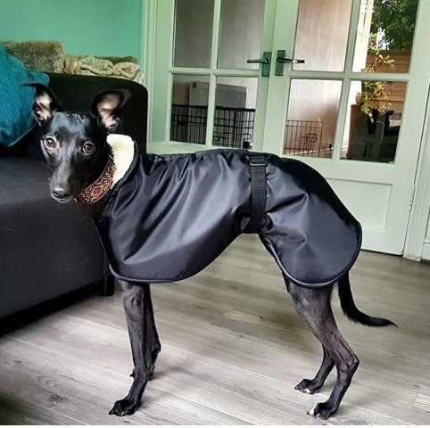 Whippet wearing our Black Waterproof Coat