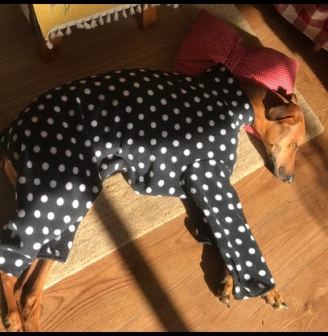 Whippet Greyhound Onesie Pyjamas