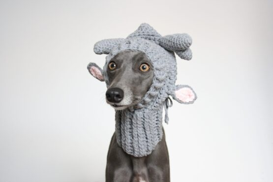 Cristmas Knitted Reindeer Whippet Hats Greyhound Lurcher