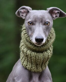 whippet greyhound snood