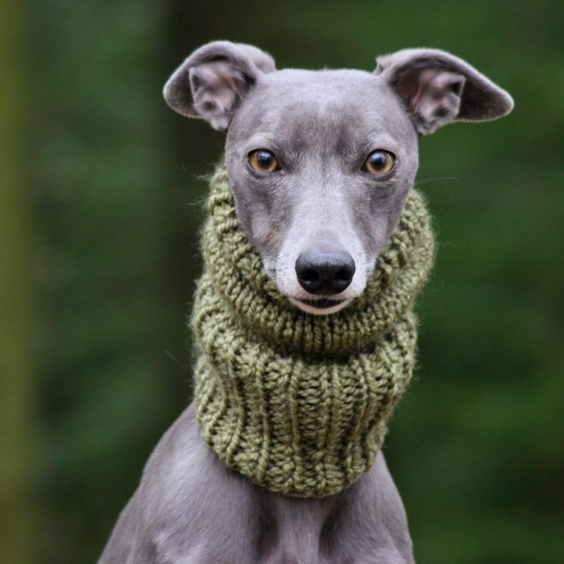 Whippet Olive Knit Neck Warmer Greyhound Italian Sighthound