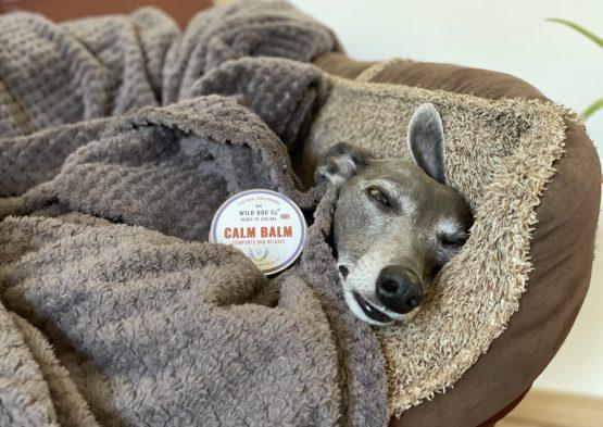 whippet greyhound balm