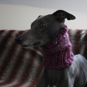 whippet greyhound neck warmer