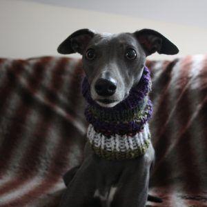 neck warmer whippet greyhound
