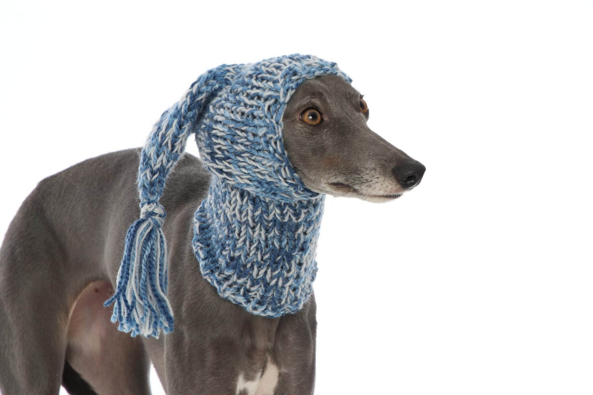 Whippet Greyhound Blue Knit Hat Snood | Lurcher Italian ...