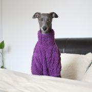 whippet greyhound clothing