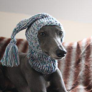 whippet clothing greyhound