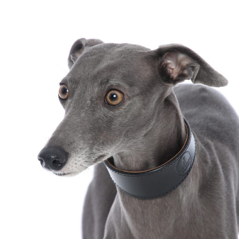 Exclusive Black Sheep Leather Whippet Collar Greyhound