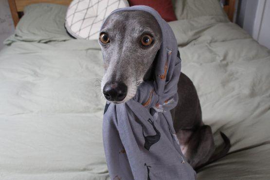 whippet greyhound scarf