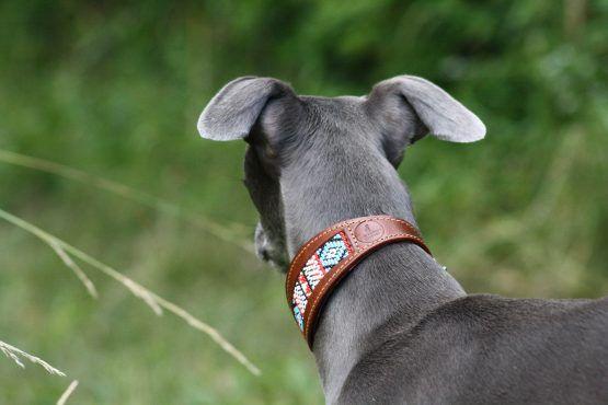 whippet greyhound collar