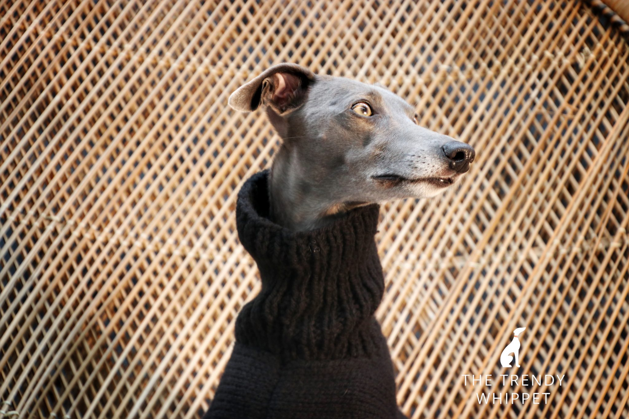 Hand Knitted Black Whippet Jumper Greyhound Italian Lurcher
