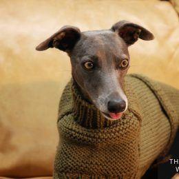 whippet greyhound jumper