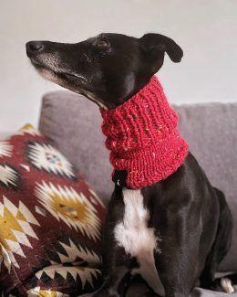 whippet greyhound snood