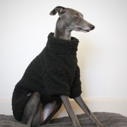 jumper whippet greyhound