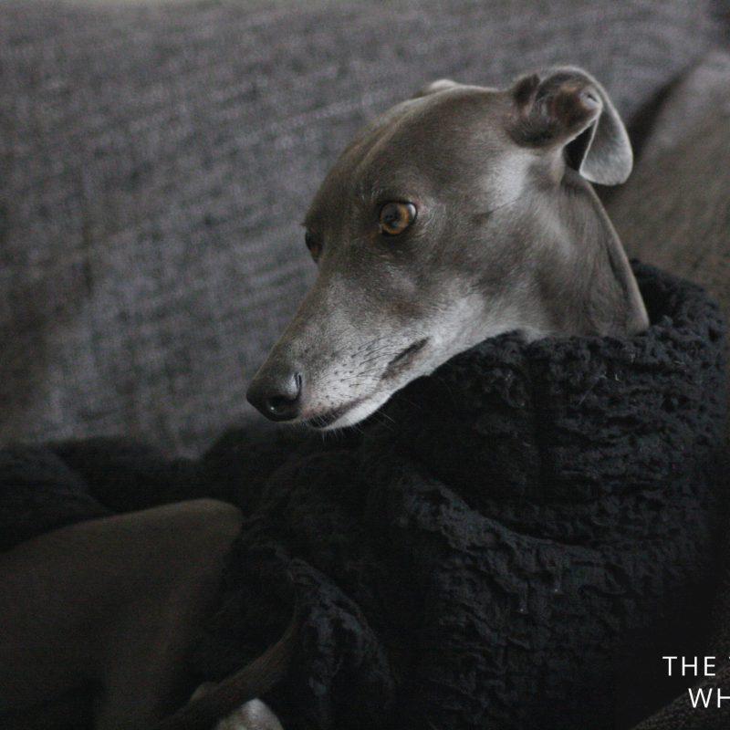 Black Fluffy Fleece Jumper Whippet Greyhound Italian