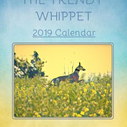 whippet greyhound calendar