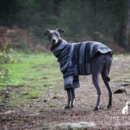 whippet greyhound jumper