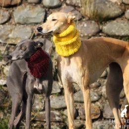 Dog Clothing Amp Accessories Whippet Greyhound Amp Italian