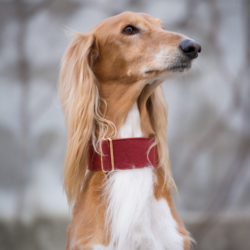 Wine Red Martingale Collar Whippet Greyhound Italian