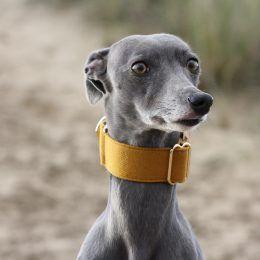 martingale collar whippet greyhound