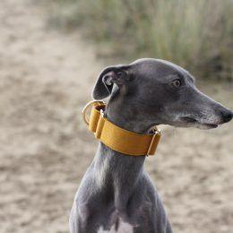 whippet martingale greyhound