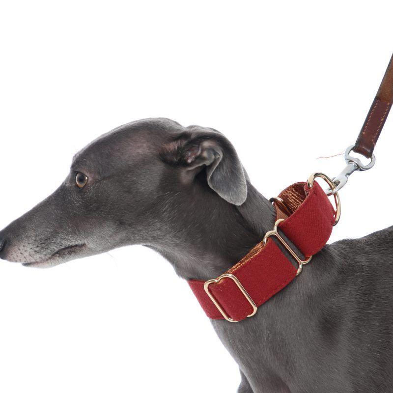 Wine Red Martingale Collar Whippet Greyhound Italian