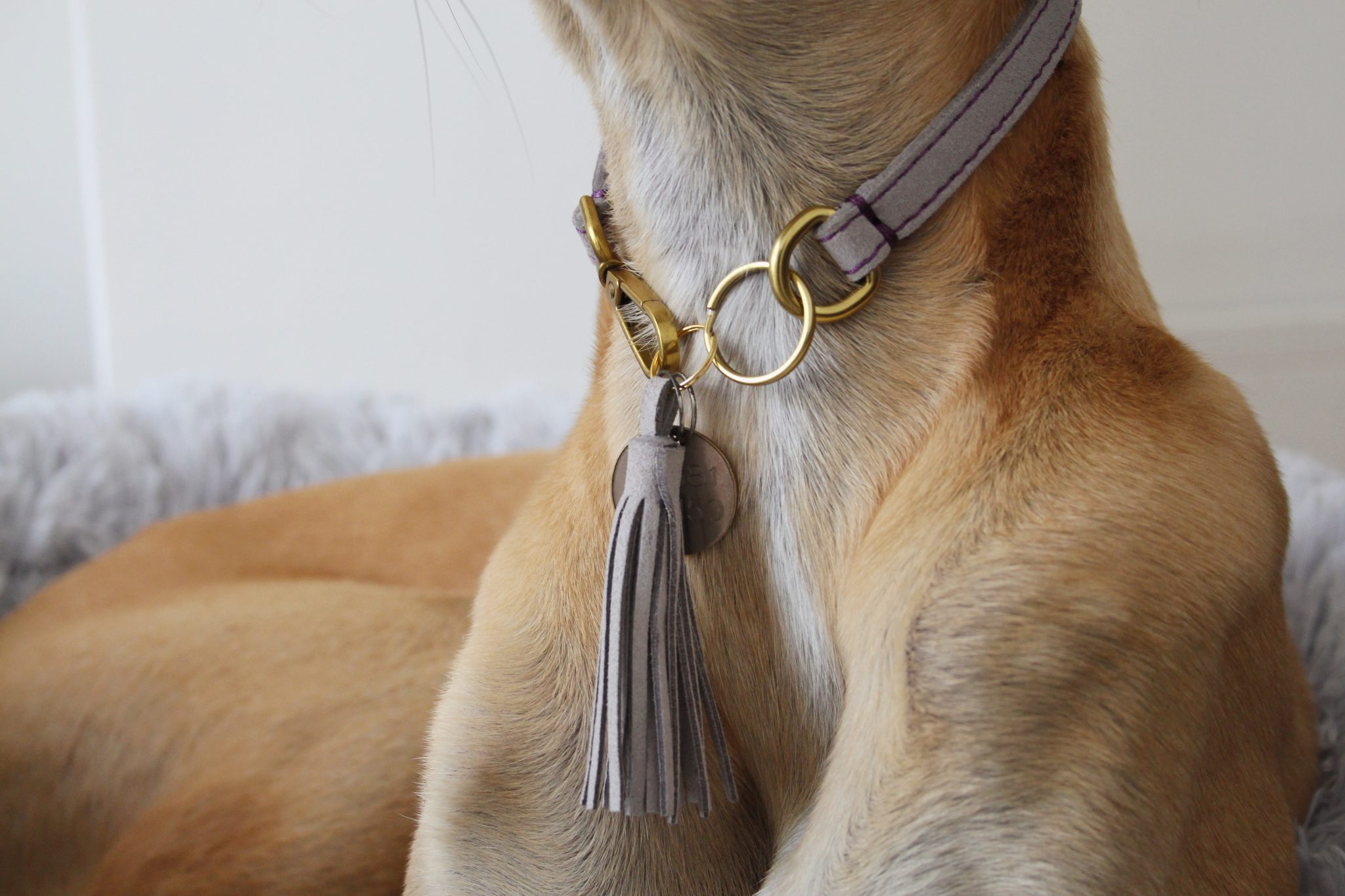 Grey Suede Indoor House Whippet Collar Greyhound Italian