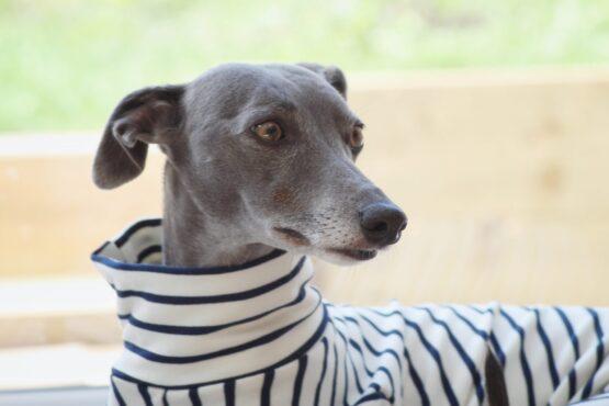 onesie whippet greyhound