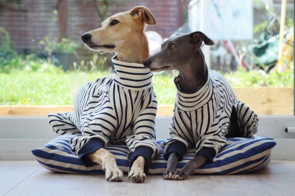 onesie whippet greyhound