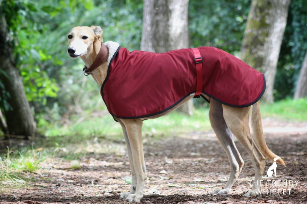 Burgundy Waterproof Fleece Lined Greyhound Coat Whippet