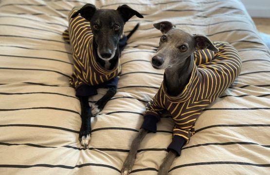 whippet greyhound onesie