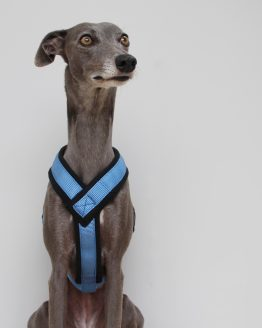whippet greyhound harness
