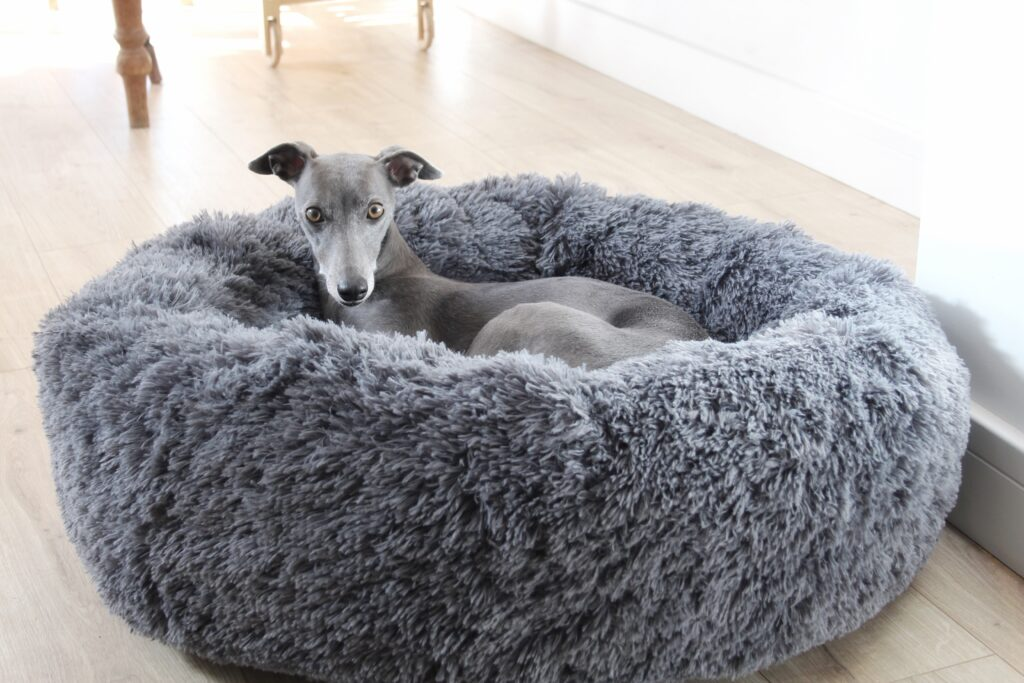 hunkin hounds bed